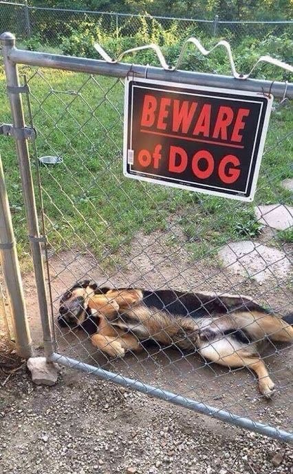 Beware of dogg he wants belly rubs