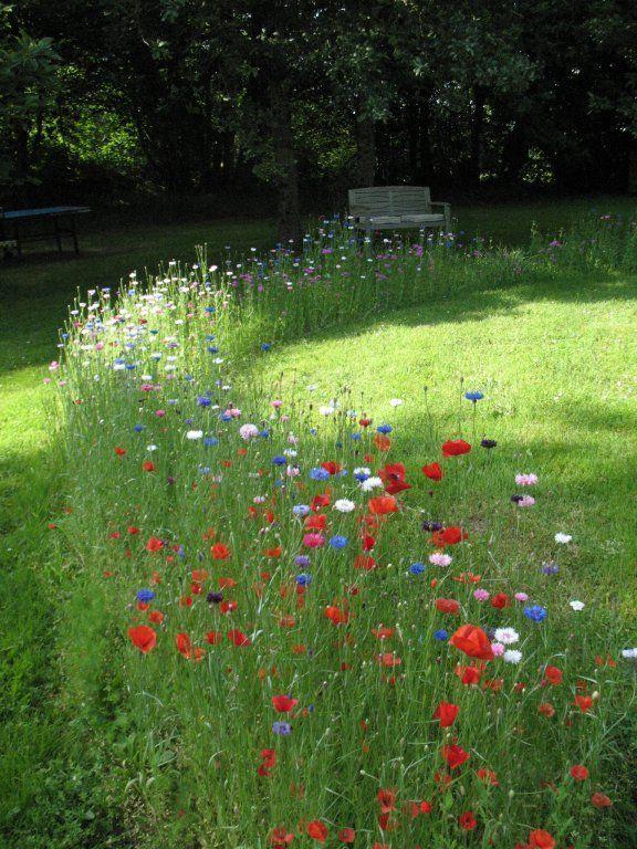 Blumenweg Flowers Fruhling Garten Entwurf Cottage Garden Wildflower Garden Plants