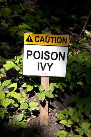 Stop suffering in silence! Learn how to treat poison ivy and oak with these remedies that soothe the itch as quickly as possible.
