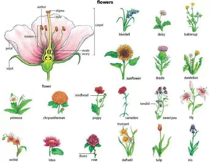 Parts of the flower and flower names the outdoors for Garden trees types