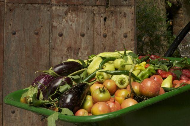123ole´s Biologic Vegetable garden