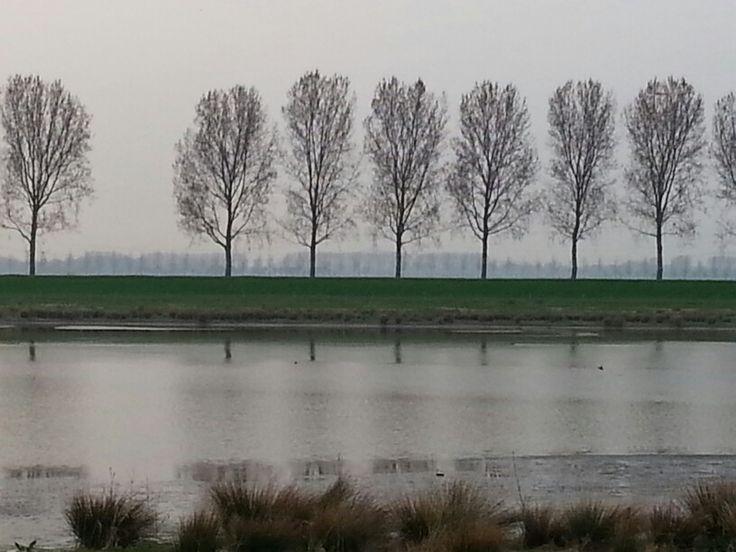 Tongplaat Dordrecht