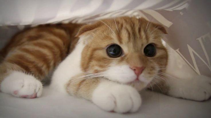 Dieses Video wird dich aufmuntern! – Süße Katze   – Cats