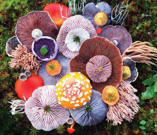 Voice of Nature - Mushroom landart byJill Bliss