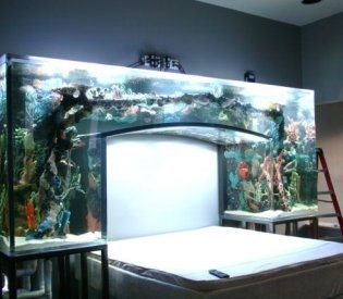 125 Best Home For A Fish Images On Pinterest Fish Tanks
