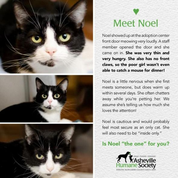 Love The Marketing That Comes Out Of Asheville Humane Society Wish They Would Offer Templates Petphotography Pet Phot Pet Adoption Adoption Humane Society