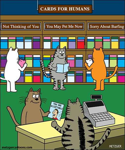 "Cat Cards for Humans: ""you are acceptable; not thinking of you; you may pet me now; sorry about barfing..."" bahahahaha"