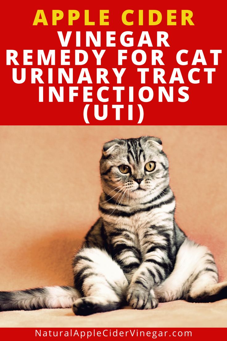 how to treat cat uti at home