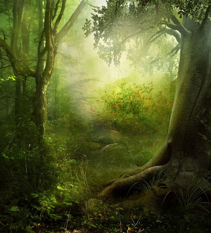 Enchanted Forest | Enchanted_Forest_Premade_by_frozenstocks.jpg