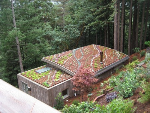 17 Best Images About Roof Gardens On Pinterest Gardens