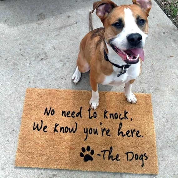 No Need To Knock We Know You Re Here Doormat Unique Gift For Dog