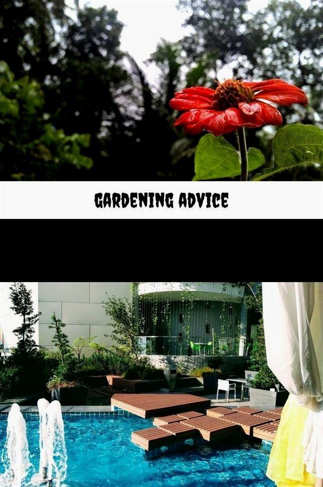 Gardening Advice 45 20180711051614 23 Jersey Plants Direct Customer