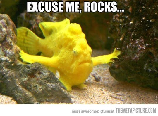 I have important things to do #FISH #FUNNY #ANIMAL #HUMOR