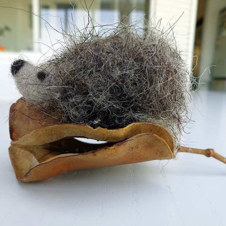 The friendly hedgehog