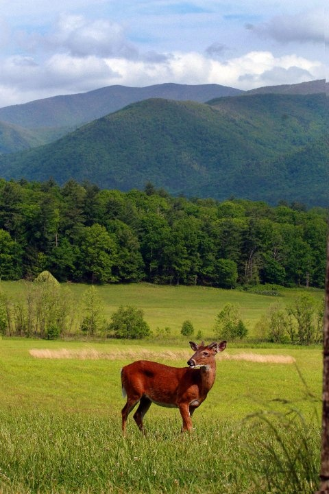 28 Best Images About Smoky Mountain Wildlife On Pinterest