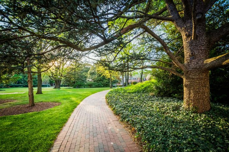 Trees along a walkway at Johns Hopkins University in Baltimore, Maryland.