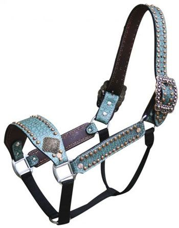 Showman Belt Style Teal Alligator Halter | ChickSaddlery.com