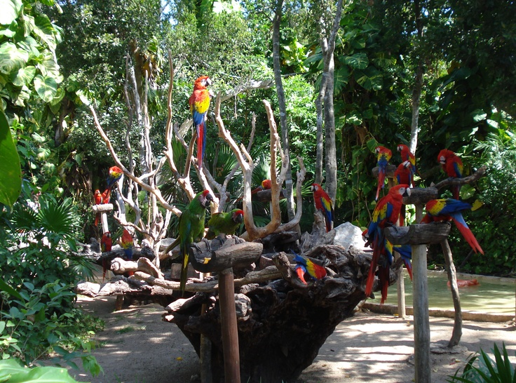 Macaws in Xcaret, Riviera Maya, Mexico