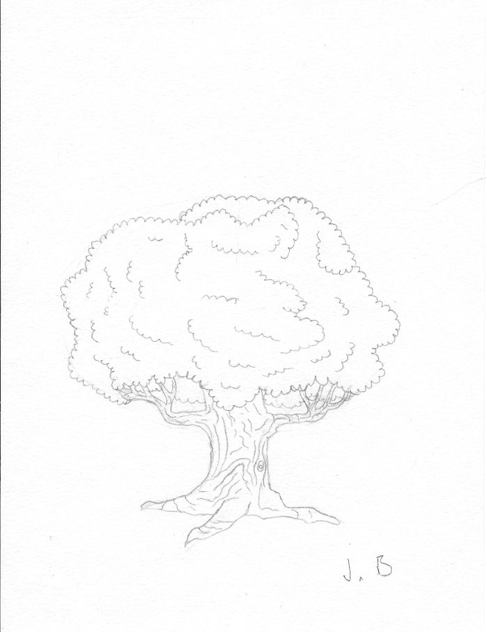 A simple oak tree