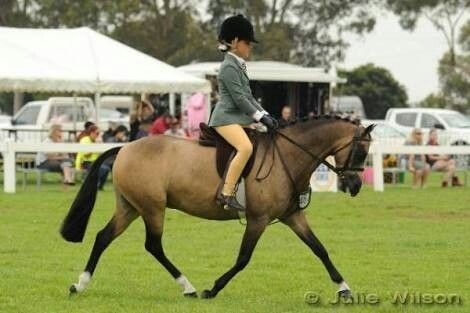 Show Hunter Pony Type