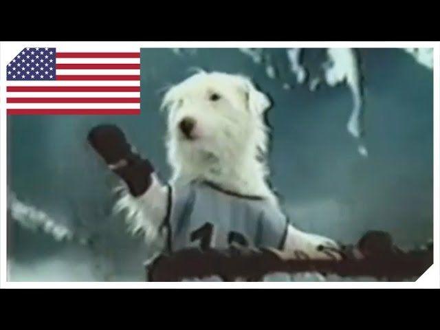 Und sie gewinnen das Rennen jedes Jahr.     https://www.youtube.com/watch?v=p0EnH0M55xo   #Commercial #dielustigstenwerbespotsderwelt #DotheDew #Dose #Gebirge #Hund #Lustig #lustigeWerbung #Schlitten #Schlittenrennen #Schnee #Tiere #USA #Werbesport #Werbung #Winter