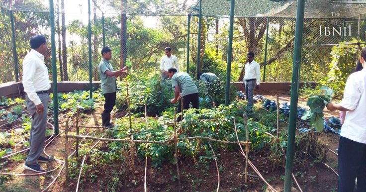 In keeping with our green initiatives, bio-natural vegetables and fruits are grown at #theIbnii_Coorg. Vermicompost and recycled water are used to increase the soil fertility of the garden. Broccoli, spring onion, strawberry and other seasonal vegetables are grown under the expert care of our competent staff. #TheIbnii_Pure #GreenPractices