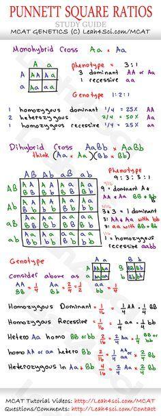 Punnet-Square-Ratios-MCAT-Genetics-Cheat-Sheet-Study-Guide.jpg 1,069×2,750…