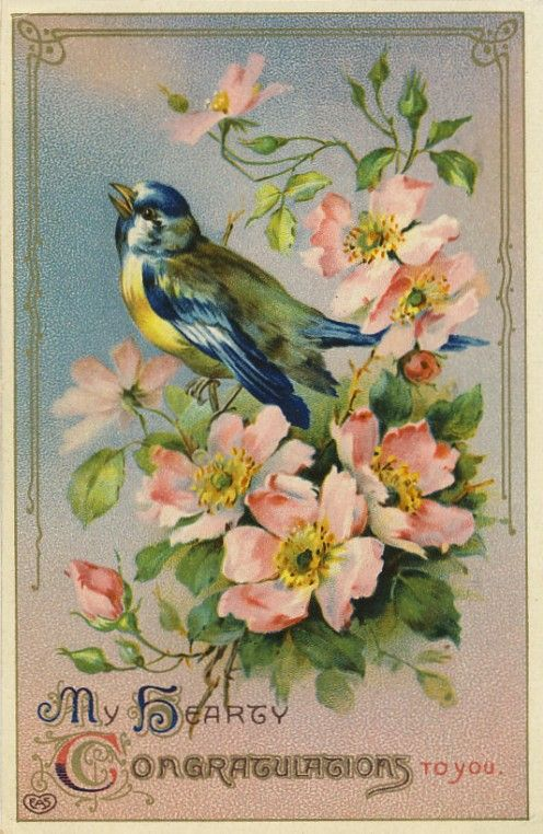 Antique Postcard Images From My Personal Collection – BirdsPatti S