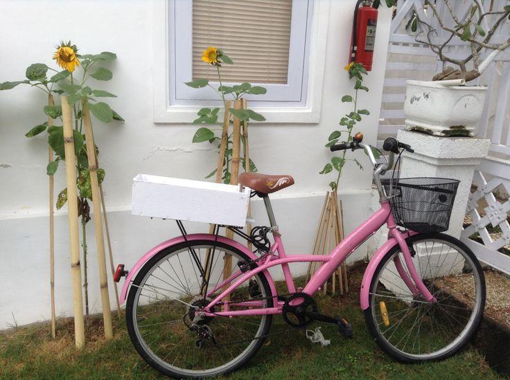 Pink bicycle @ ole ole Ollie , echo beach Bali