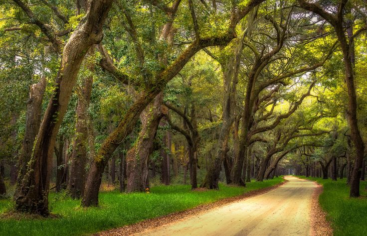 Photograph Botany Bay Road by Mel Myers on 500px