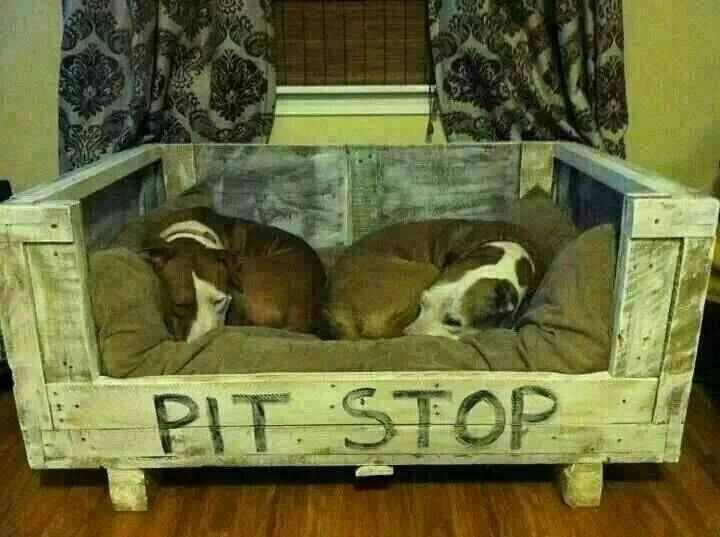 Adorable! Maybe once Ghost stops eating any bed we give him he can have a cute one like this :)