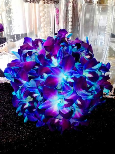 electric blue orchids