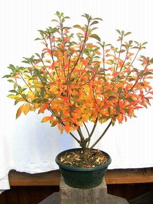 85 best pflanzenrarit ten images on pinterest plants. Black Bedroom Furniture Sets. Home Design Ideas