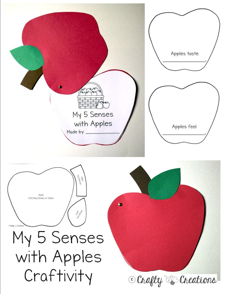 My 5 Senses with Apples Craftivity that includes patterns, directions, and correlating worksheets for teaching students about apples.