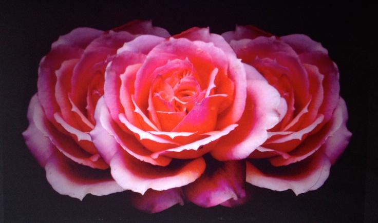 Roses - Uni