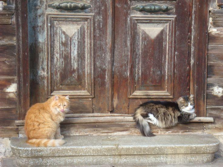 Heybeliada kedileri
