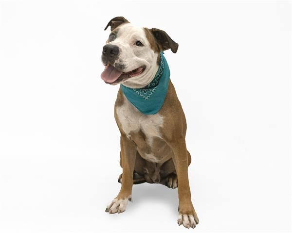 09 19 2019 Super Urgent Adopt Dog Fontaine Due To Be Destroyed At