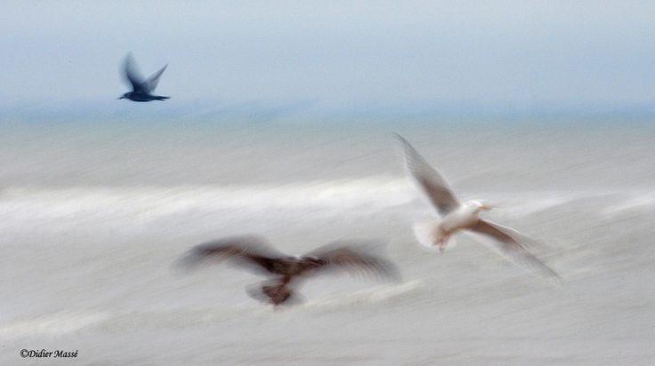 """didier95 posted a photo:  Cabourg Calvados 01/16  Nikon D300s  Pas d'effets """"Photoshop"""", simplement pose lente et flou de bougé à la prise de vue.  www.didiermasse.com"""