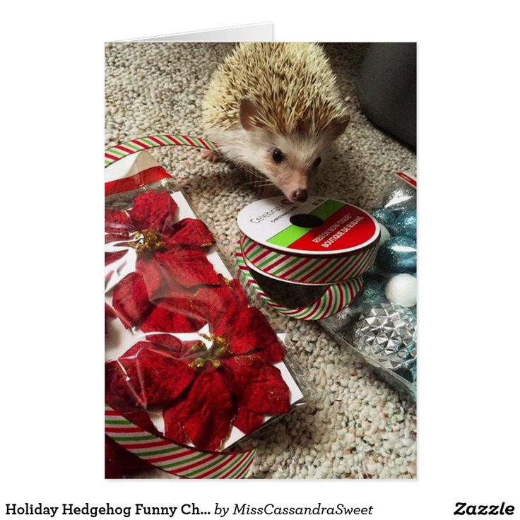 Holiday Hedgehog Funny Christmas Card