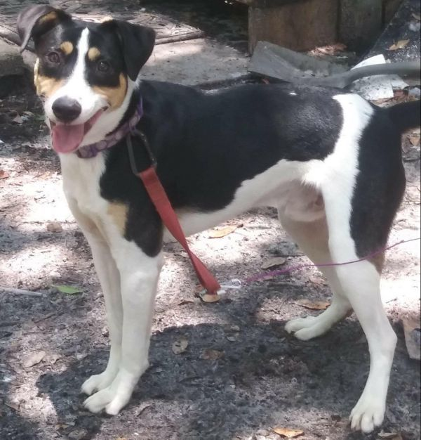 Dogs For Adoption Petfinder Dog Adoption Cat Adoption Pet Adoption