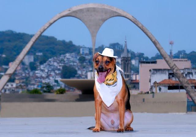 Cães terapeutas posam em pontos turísticos do RJ : Pixote no Sambódromo - Crédito: Divulgação/ Assessoria de Imprensa  ()