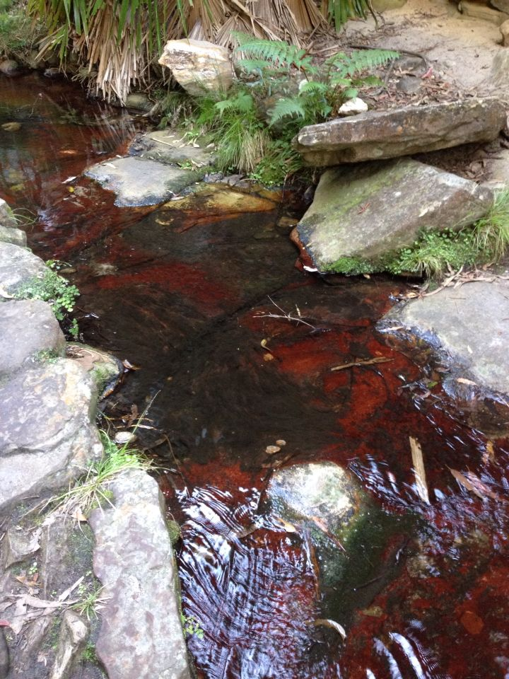 Wards Cannon. Spectacular red moss in the creek