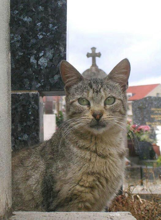 Catholic cat Funny!!!!