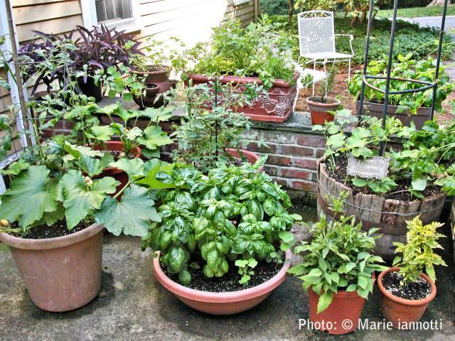 10 Vegetables You Can Grow in Containers: Growing Vegetables in Containers