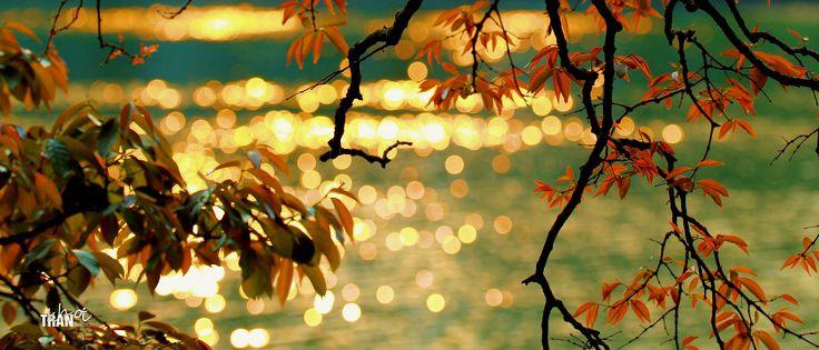 https://flic.kr/p/TgL85N   Sunset   Lagerstroemia speciosa in springtime