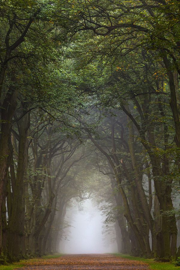 Elven Forest by Michal Vitásek on 500px