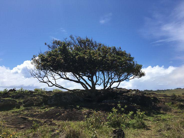 Bello desconocido -isla de pascua