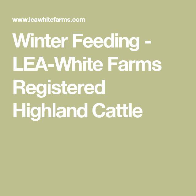 Winter Feeding - LEA-White Farms          Registered Highland Cattle