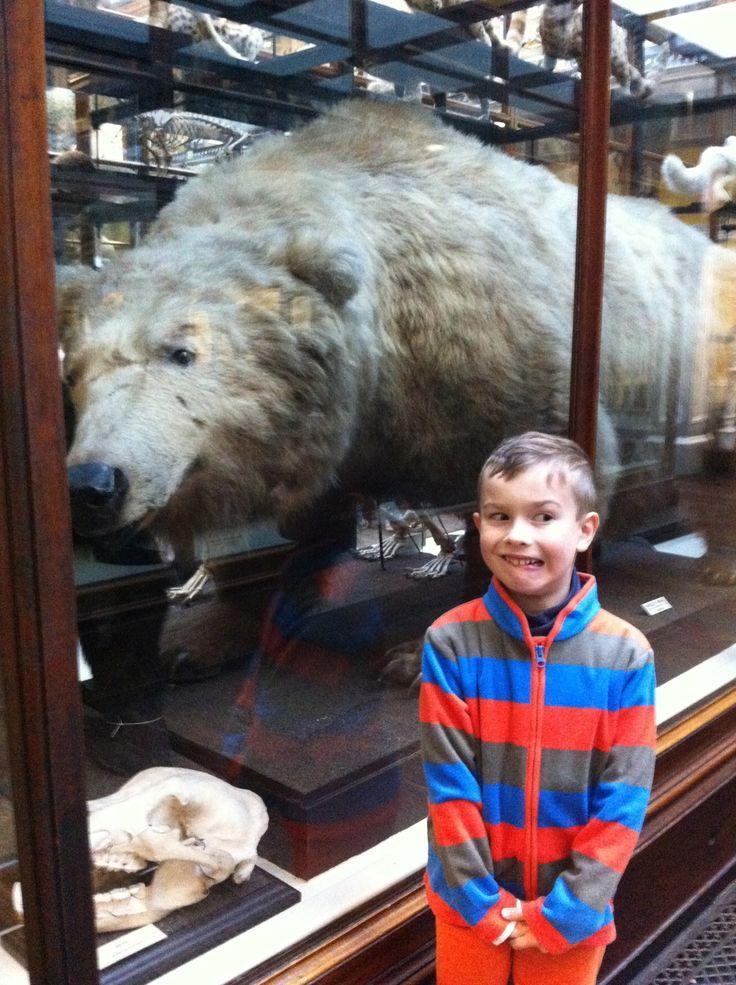 Huge greazzly bear!