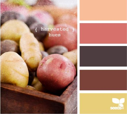harvested hues: Colors Combos, Harvest Hue, Kitchens Colors, Design Seeds, Paintings Colors, Colors Palettes, Master Bedrooms, Colors Schemes, Colors Hue